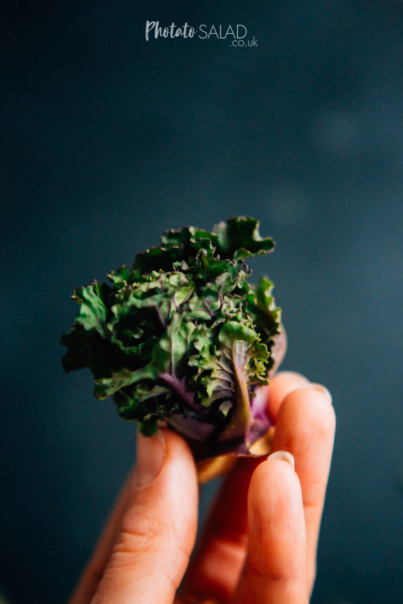 Purple & Green Kalettes being held between fingers